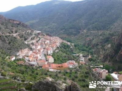 Ayna - Sierra del Segura; viajes aventura; tejo arbol